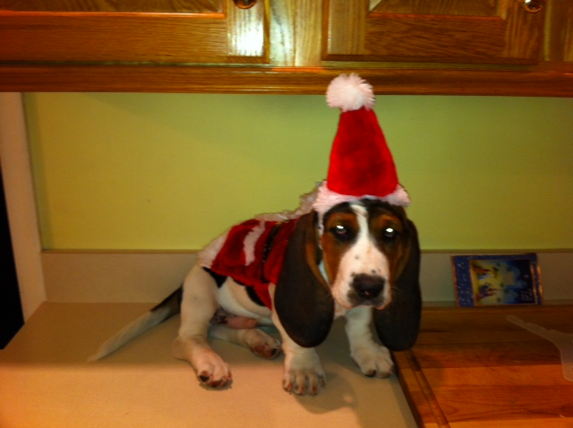 Happy Holidays from Rosco and the Murray Family